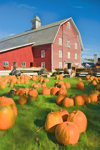 Pumpkins For Sale Along Route 2, Williston-Richmond, VT