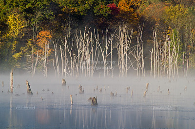 Morning fog at Monksville Reservoir, Hewitt, New Jersey, USA