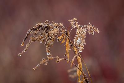 November Colors 2