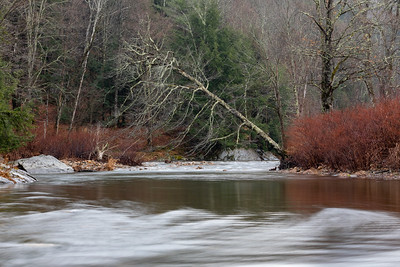 Mad River Tree