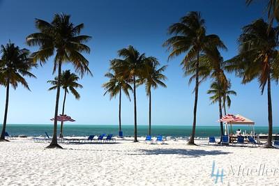 Sand & Palms