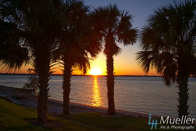 FL Sunset Palms