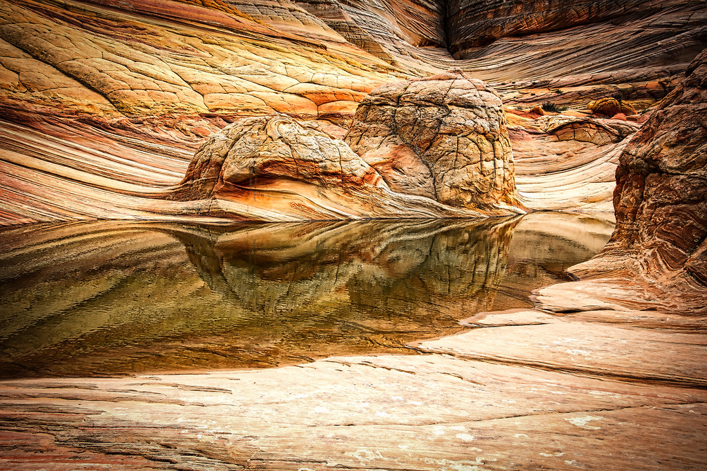 Gnarled Reflection