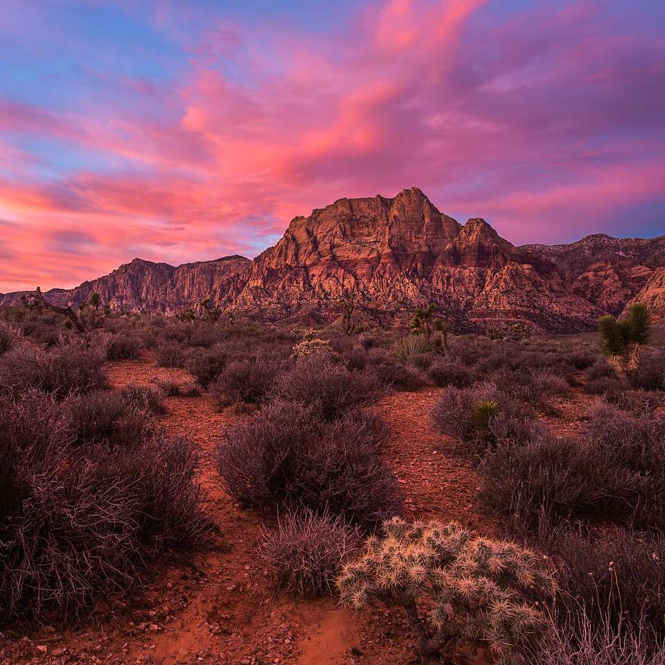 Pink Sunrise at Red Rock
