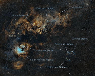 Wild Cygnus with Annotations