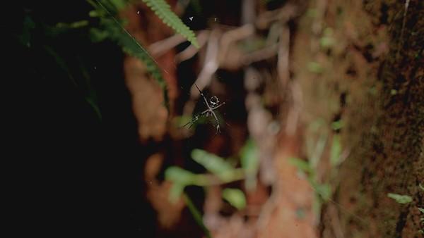 spider eating Osa, Costa Rica February 2021