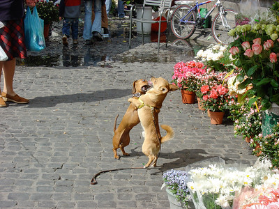 Dogs in Rome, Italy, March 2005