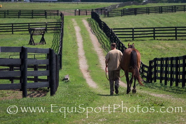 A horse is being led out to his pasture at Blackburn.