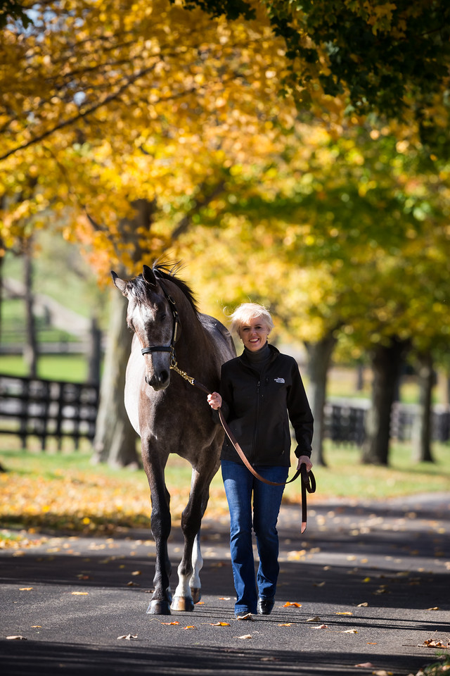 Frances and Tapit colt at Don Alberto 10/29/15.