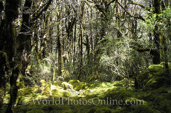 South Island - Sylven Glade by Mt Rolleston