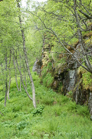 Flam Hike 5 - Forest