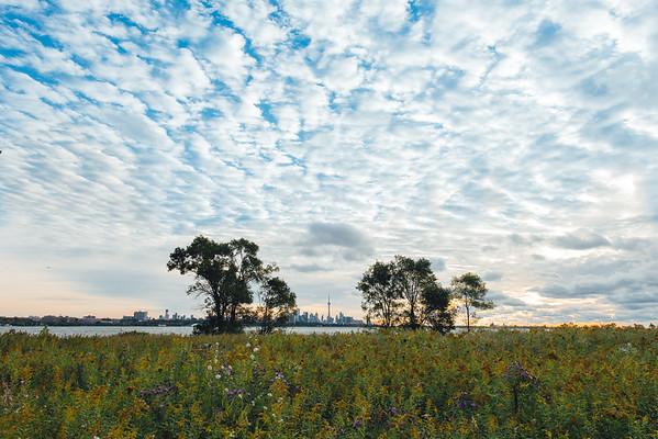 A Toronto Floral Landscape