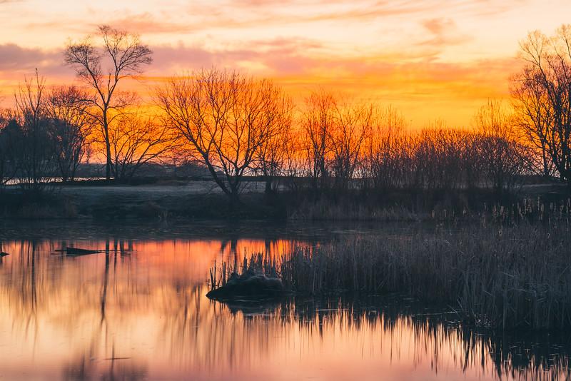 Sunrise in the Wetland