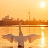 Swan Lake - Squared