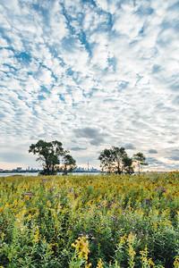 A Floral Landscape