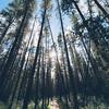 Escape Amongst the Trees