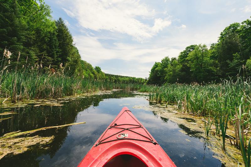 Kayaking Through a Wetland