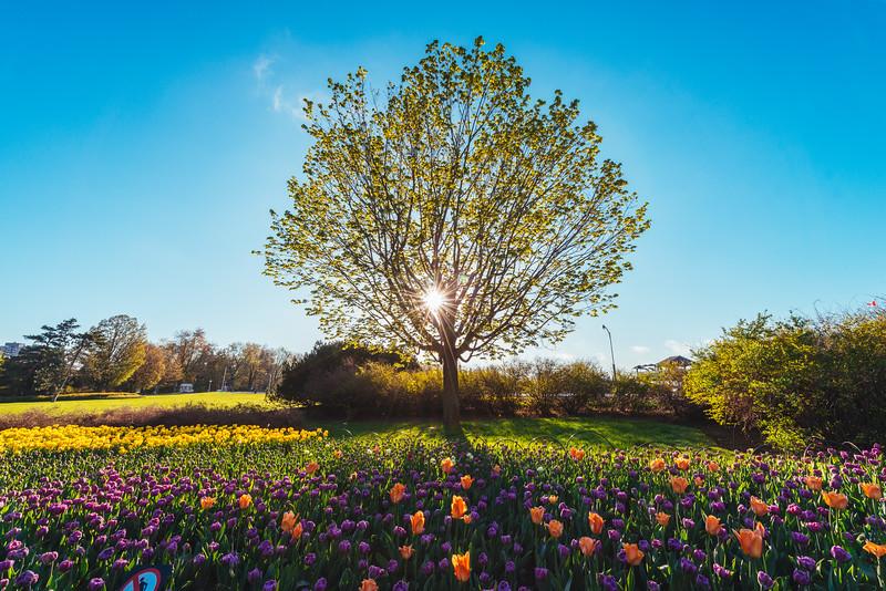 Tree of Life Landscape