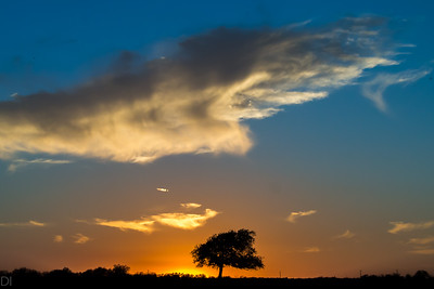 Fall sky at sunset near Argyle Texas with single tree