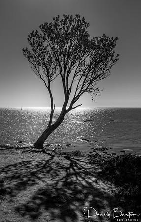 The Tree ~ Black & White