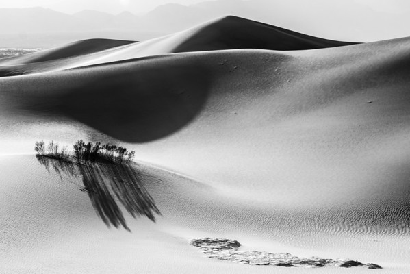 The Shadows of the Desert