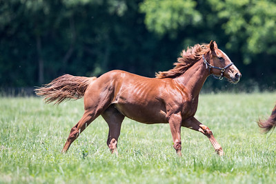 Top of the Morning yealing filly at Winchester Farm 6.07.18.