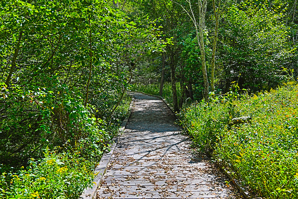 Limberlost Trail, Shenandoah National Park, Virginia