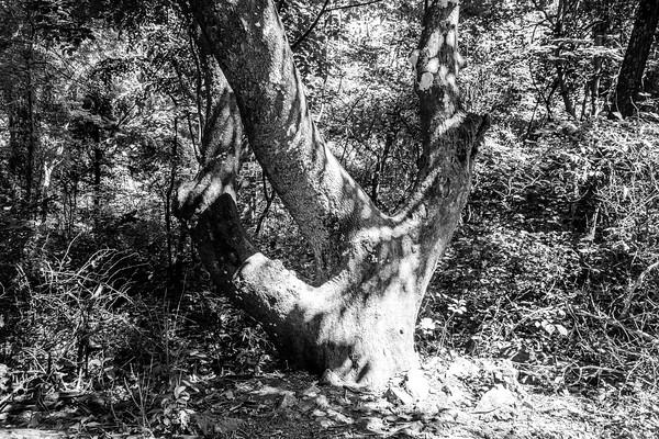 Fox Hollow Trail, Shenandoah National Park, Virginia