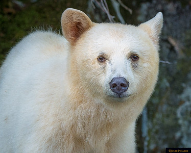 Portrait of Winnie