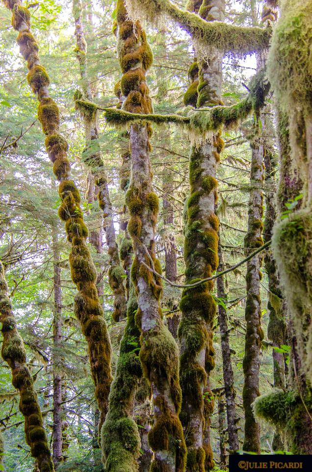 Interesting  moss formations