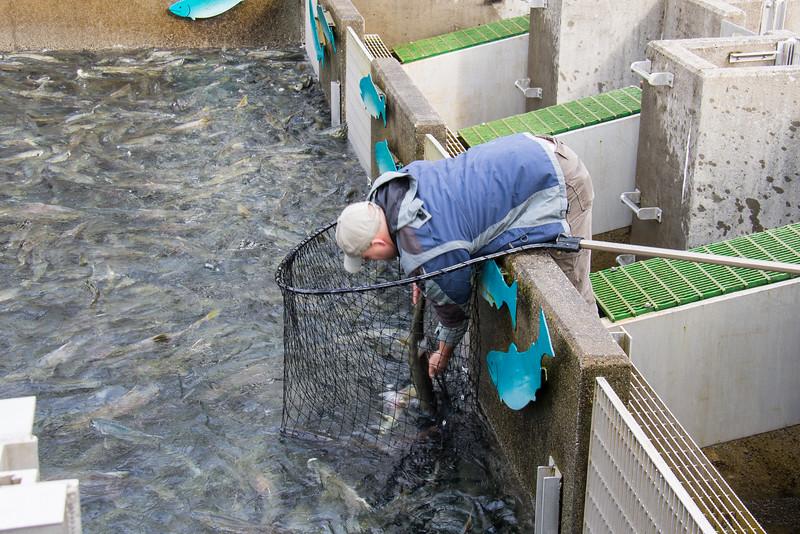 DIPAC salmon hatchery