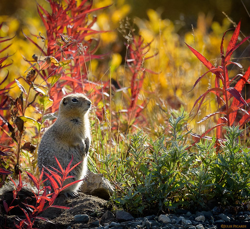 A ground squirrel near the road watches as we pass.