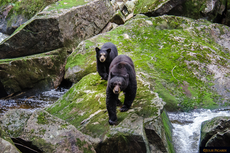The cub is nervous and follows his mom every step.