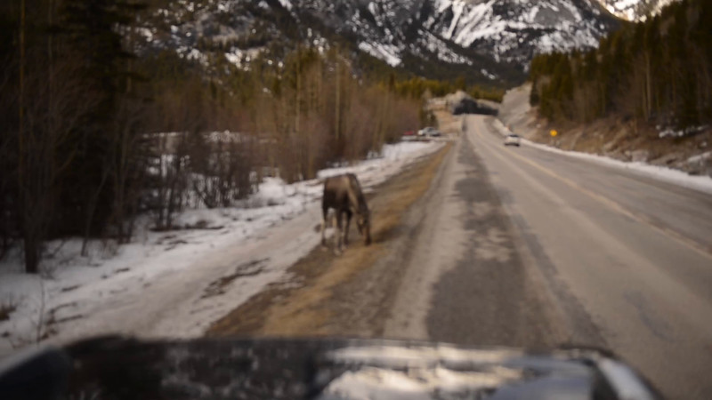 Video: Fervently grazing, seemingly immune to our presence.