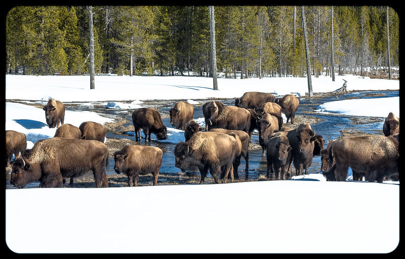 Congregation at the Firehole
