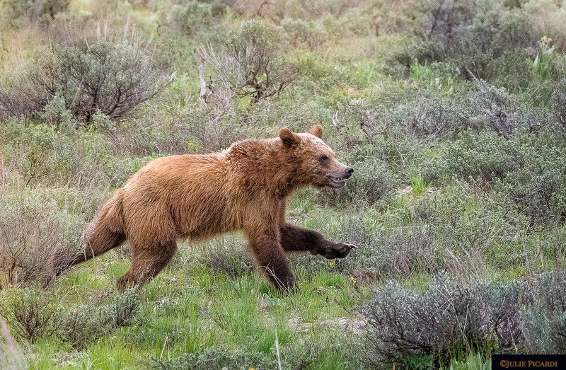 Just like any kid, this cub of #399 loves to run and play.
