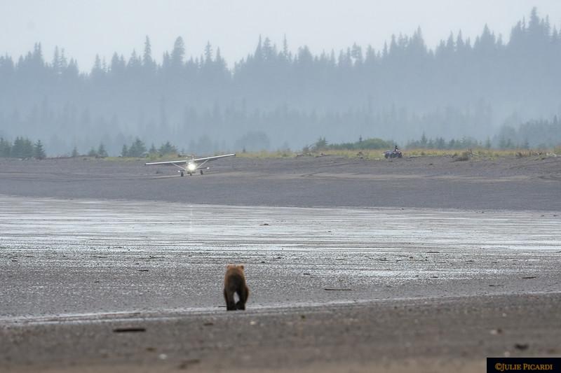 The bear walks toward the plane.