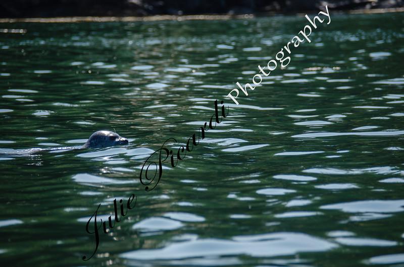 Resident Seal of Northeast Harbor