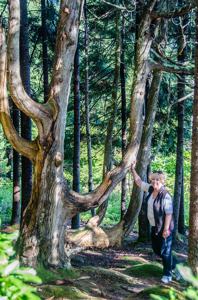 Michele and Her Tree