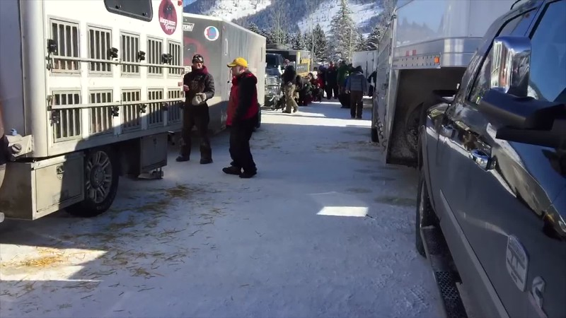 VIDEO:  Pedigree Stage Stop Sled Dog Race