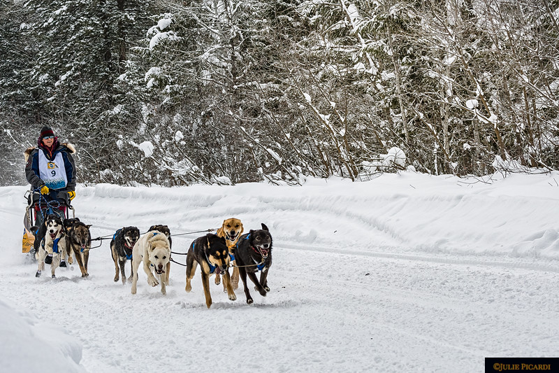 Mushers and dogs look happy to be out in their element.