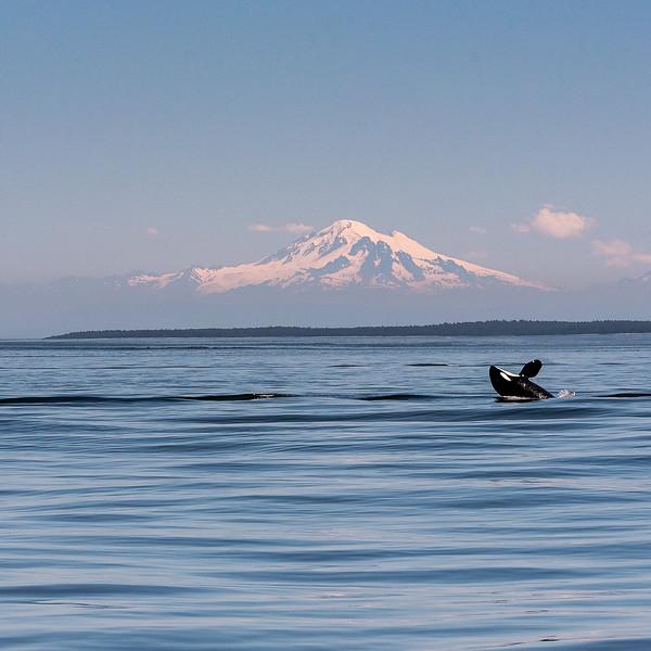 Cartwheeling in front of Mt. Baker PhotoCrop