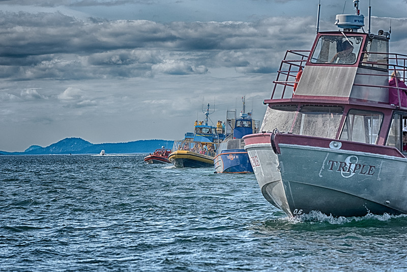 A fleet of boats all in line, all scouring the waters for the elusive Orca whales.