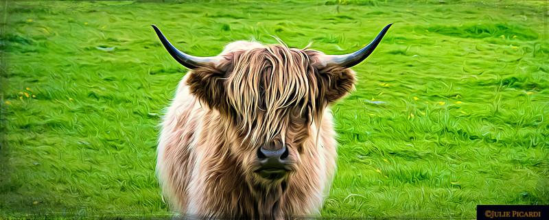 Highland Cow Color Landscape