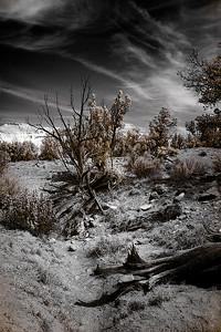 Kodachrome Basin State Park, Utah Canon 5D, Hoya R72 IR filter.