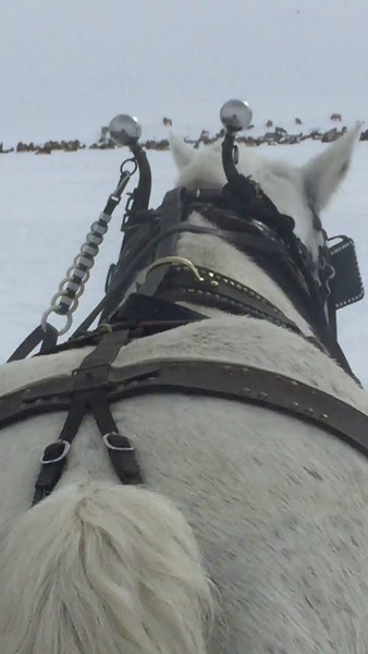 Video of our sleigh ride.