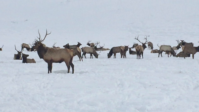 Video: Information about how the herd is fed in the refuge.