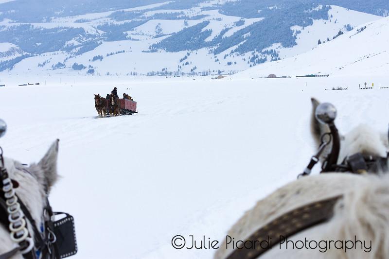 Sleigh Ride through the elk refuge in Teton National Park.