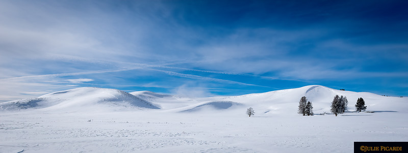 Lone Tree - Hayden Valley