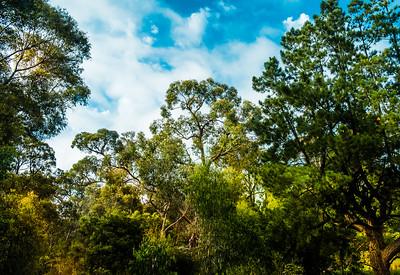 Wombolano Reserve